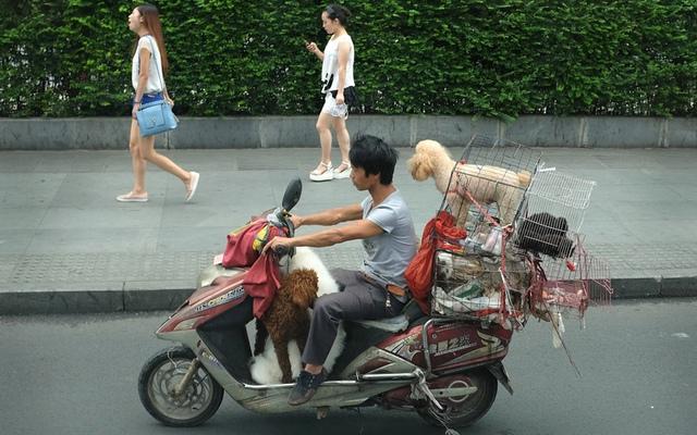 Người bán chó lái xe máy trên đường ở thành phố Thành Đô, Trung Quốc.