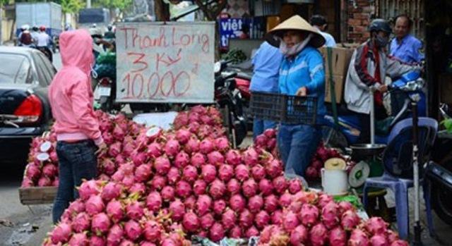Đầu tháng 9 là cuối vụ thanh long. Tuy nhiên, thay vì được giá bán thì trái thanh long ở Bình Thuận vẫn rớt giá, không có thương lái thu mua. (Ảnh: Thanh Tùng)