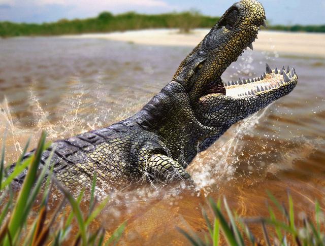 Hình ảnh phục dựng của cá sấu Purussaurus