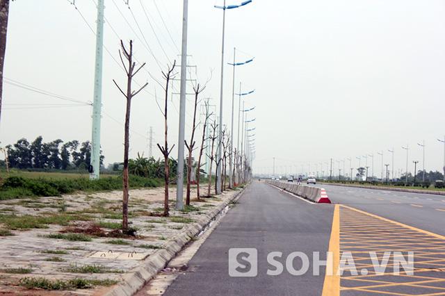 Cả tuyến đường không có nổi một bóng mát vì cây trồng để lấy bóng chẳng cây nào còn sống