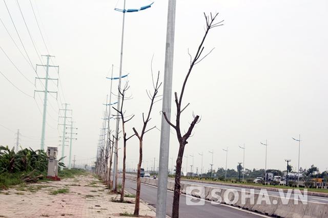 Tuy nhiên, mới đưa vào hoạt động chưa được bao lâu, thì hệ thống cây xanh ven đường, gồm hàng trăm cây đã bị chết khô hàng loạt, kéo theo sự xuống cấp về mỹ quan chung của tuyến đường.