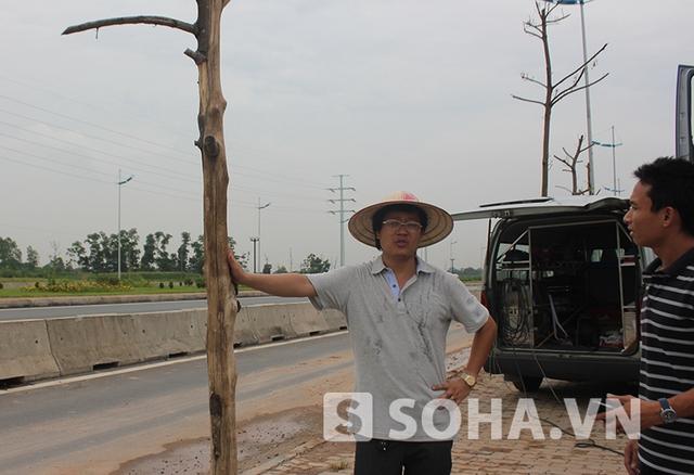 Theo những người dân địa phương, những cây này chết chỉ sau ít ngày được trồng xuống