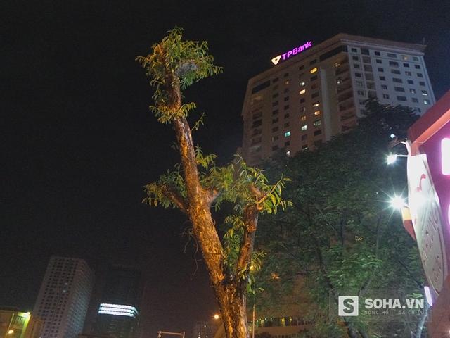Cây xanh lạ đang được nhà báo Trần Đăng Tuấn nhắc đến