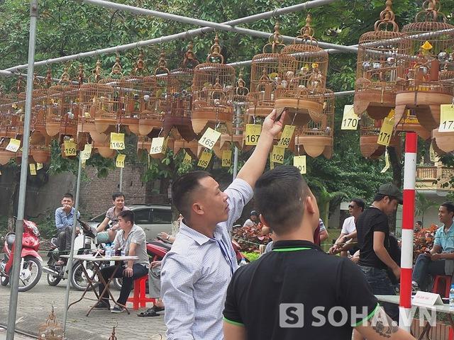 Ông Đỗ Văn Hạnh, chủ tịch CLB Chim vành khuyên Tuổi Trẻ - đơn vị tổ chức, cho biết, có 269 con chim được đem đến từ các tỉnh miền Bắc.