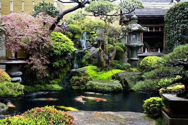 Một bể cá Koi sẽ làm khiến ngôi nhà bạn đẹp hơn.
