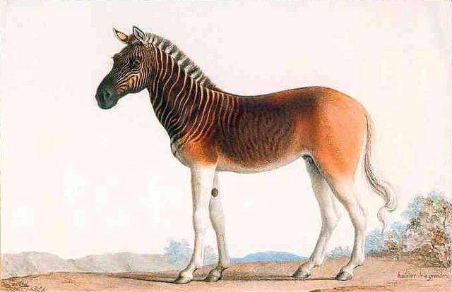 Một loại ngựa khá kỳ lạ