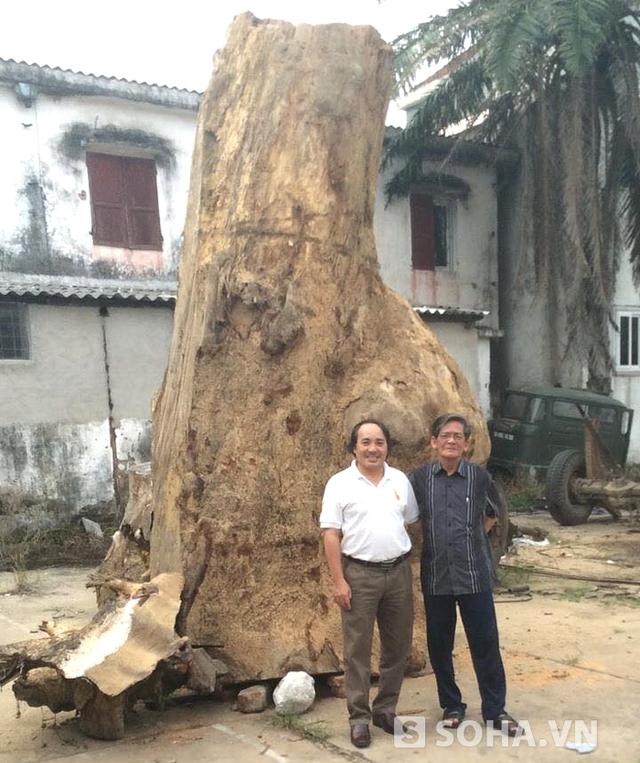 Ban đầu, khúc gỗ gù hương anh Huy mua được có chiều cao hơn 3,5m. Đường kính chỗ lớn nhất là 2,5m. Khúc gỗ này nặng hơn 4,8 tấn và ước tính có tuổi đời lên đến cả nghìn năm.
