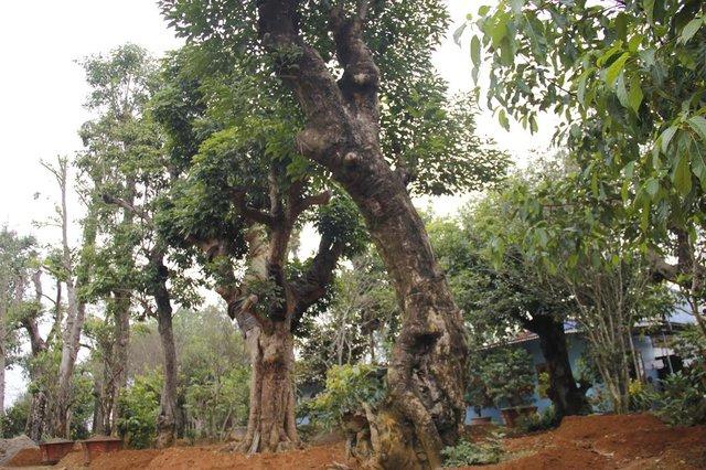 Khu chợ buôn cây nổi tiếng khắp cả nước với hàng trăm loại cây khác nhau