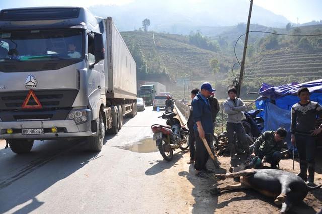 Do khách dừng mua đào, thịt trâu đông, khiến cho đoạn quốc lộ 4D chạy qua cầu Mòng Sến thuộc xã Trung Trải, huyện Sa Pa nhiều lúc bị ùn tắc tạm thời.