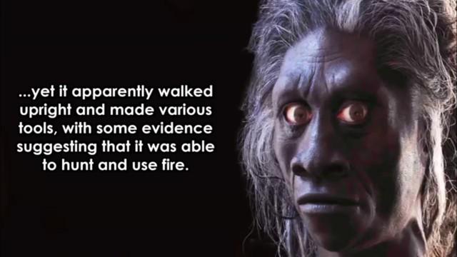 Nhiều bằng chứng khảo cổ chỉ ra rằng họ có thể dùng lửa và săn bắn nới đây, nhưng chính nguồn tài nguyên có hạn khiến chủng người này phải thay đổi kích thước nhằm thích nghi môi trường.