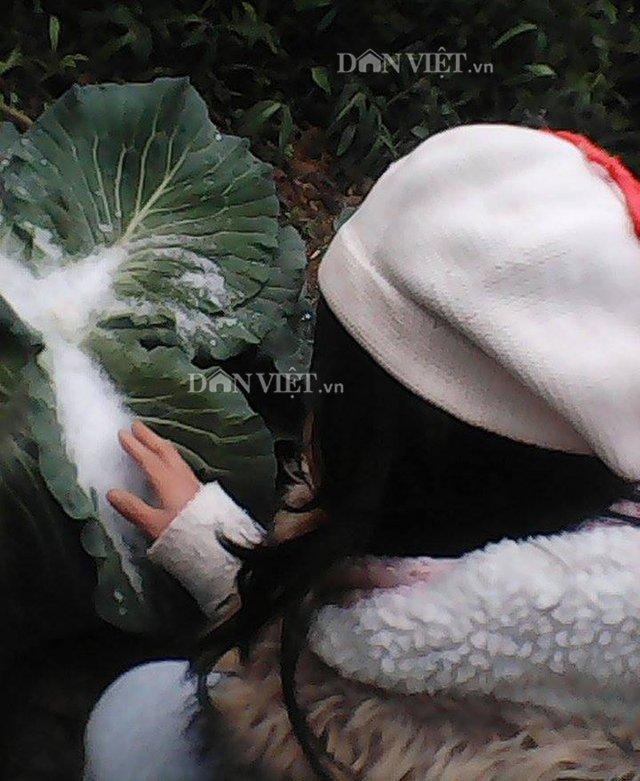 Hình ảnh ghi tại huyện Trà Lĩnh, tỉnh Cao Bằng. Ảnh: Dân Việt