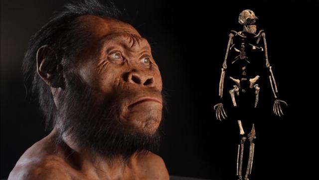 Hóa thạch được tìm thấy gồm xương cốt của trẻ sơ sinh, trẻ nhỏ, người trưởng thành và người già, trong một khu vực tách biệt bên trong hang Rising Star.