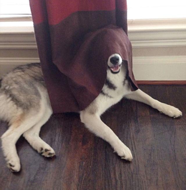Bùm! Không ai nhìn thấy mình rồi!