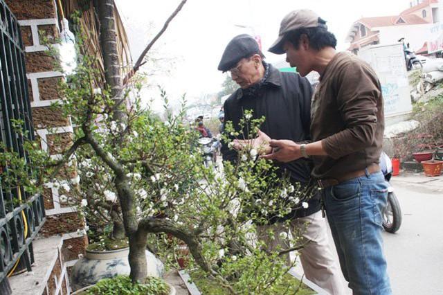 Anh Nguyễn Xuân Nguyên đang giới thiệu với khách về nét đẹp của mai và những thế khác nhau của mỗi cây.