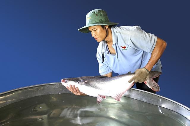 Cá mẹ Được tuyển chọn rất cẩn thận từ Viện nghiên cứu nuôi trồng thủy sản 2