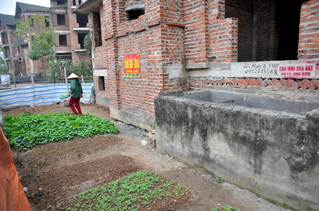 Những vườn rau này chủ yếu được người dân ở đây trồng để phục vụ thực phẩm hàng ngày của gia đình.