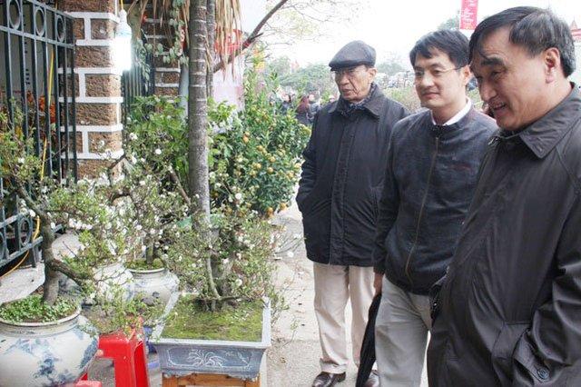 Nhiều du khách ngắm nhìn những cây mai, giá mỗi cây mai 12 năm tuổi là 6 triệu đồng.