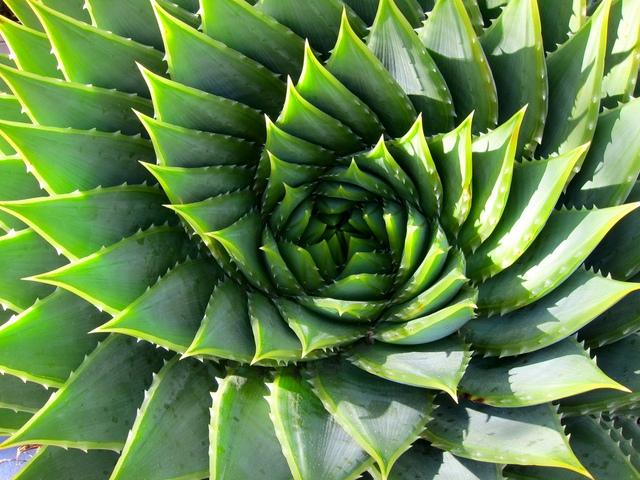 Thực vật phát triển theo tỉ số vàng
