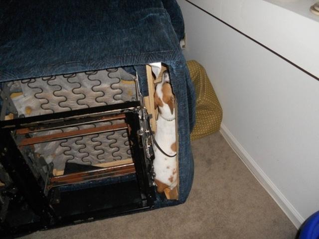 Làm thế nào mà nó có thể bị kẹt ở trong ghế sô pha chứ?