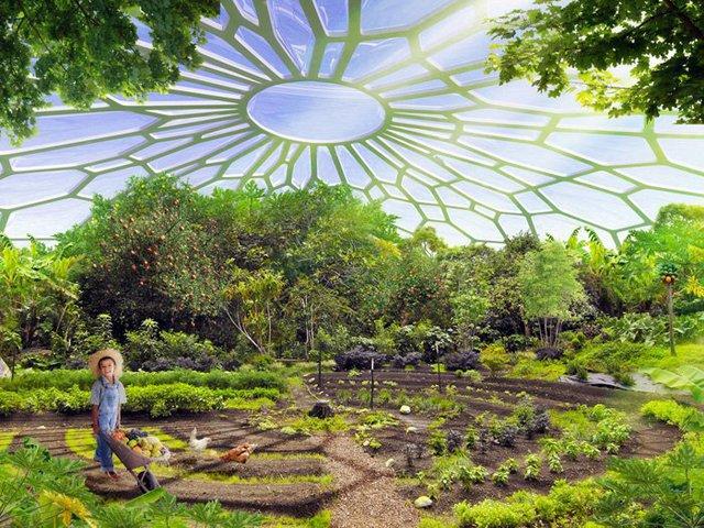 Một khu vườn.