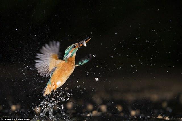 Chim bói cá có đôi mắt rất tinh nhanh. Chúng nhìn bằng một mắt khi bay và nhìn bằng cả hai mắt khi lặn xuống nước.