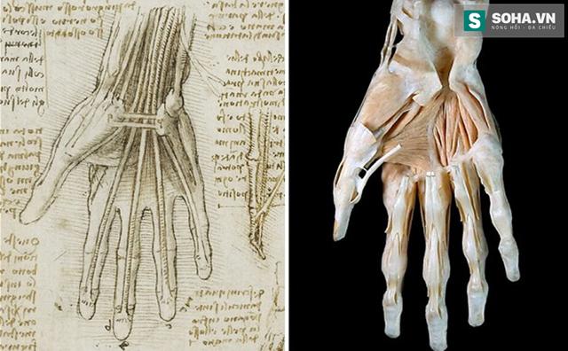 Những giải phẫu của ông chính xác tới chi tiết.