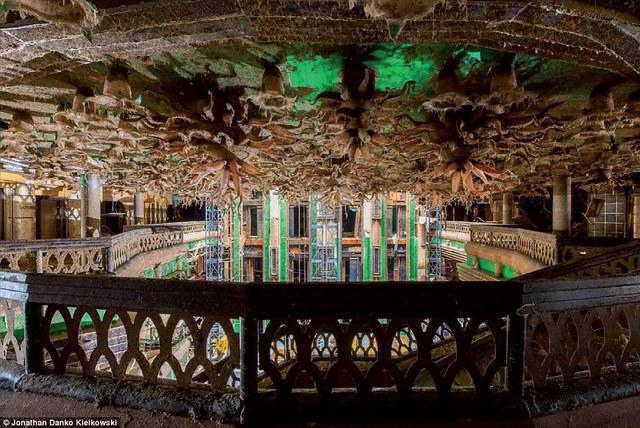 Cây thủy sinh mọc đầy trần nhà và tường bên trong tàu