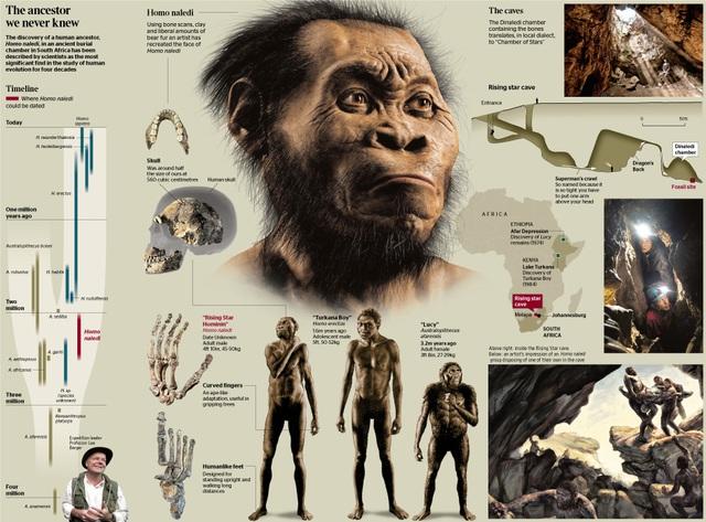 Homo naledilà một loài đã tuyệt chủng thuộc tông Người , được phát hiện trong động Dinaledi của hệ thống hang động Rising Star .