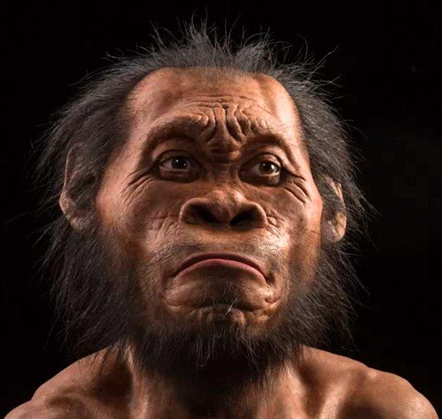 H.naledi khi đứng thẳng hai chân có thể đạt chiều cao 1,5m, cao lớn hơn so với phần lớn chủng người nguyên thủy.