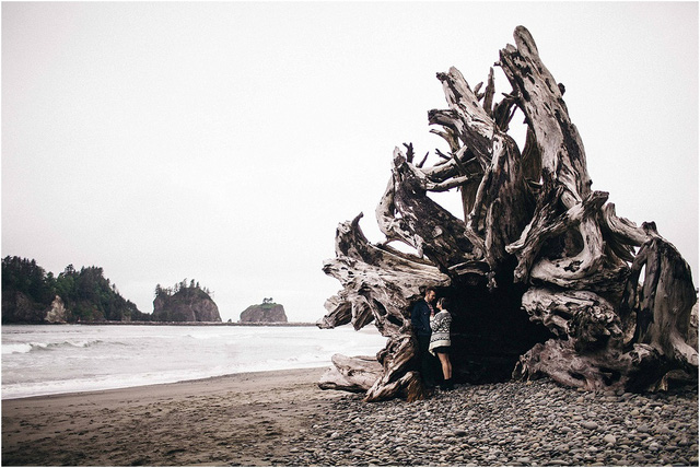 Những gốc cây to lớn trở thành nơi lãng mạn