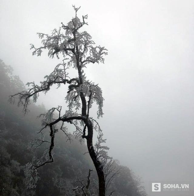 Những cành cây cao cũng đóng băng vì tuyết.