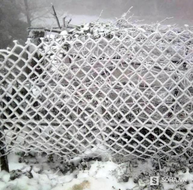 Hàng rào trắng xóa vì tuyết.