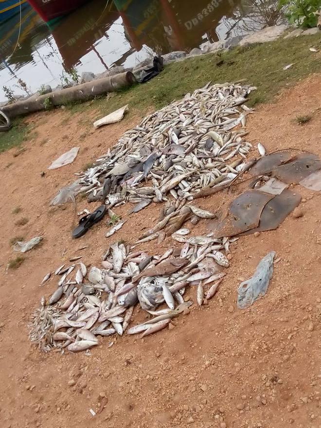 Cá chết đổ thành đống ở bờ biển Quảng Bình. Ảnh: Dân việt