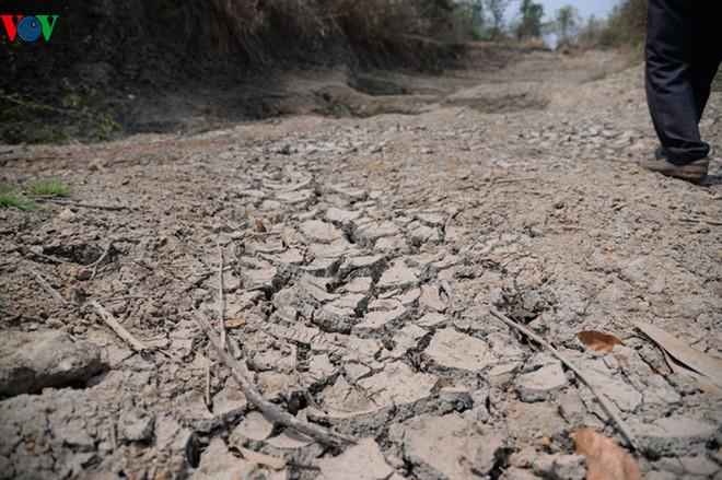 Những con kênh dẫn nước vào ruộng lúa nứt toác. Ảnh: VOV