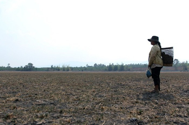 Người nông dân ngẩn ngơ nhìn tài sản của mình bị nắng cháy thiêu rụi. Ảnh: Kinh tế Sài Gòn