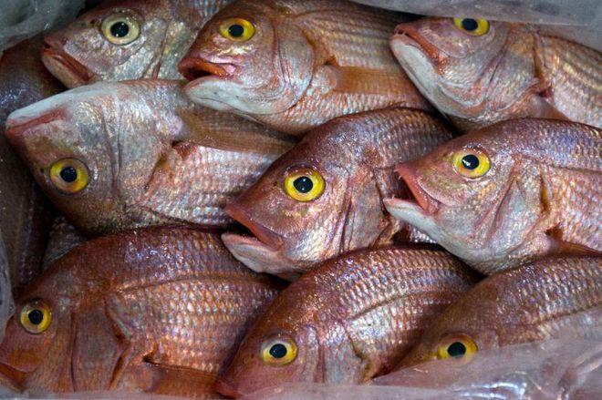 Cá bị nhiễm độc thủy ngân.