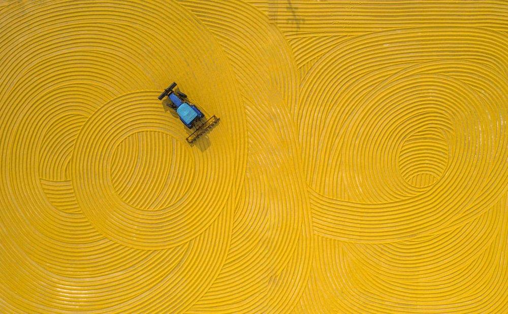 24h qua ảnh: Châu chấu đổ bộ kín đặc cánh đồng mao lương - Ảnh 4.
