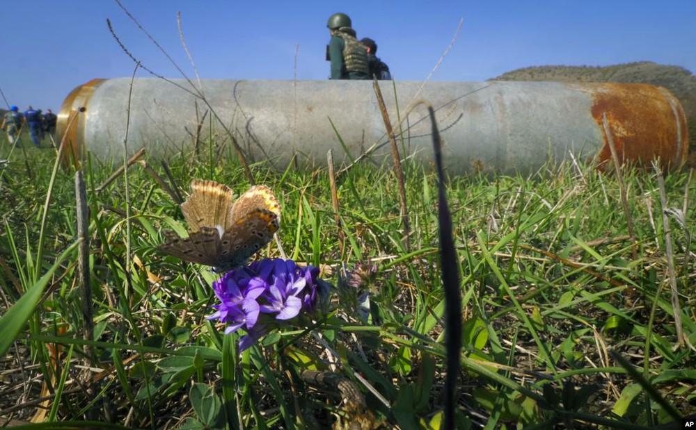 24h qua ảnh: Châu chấu đổ bộ kín đặc cánh đồng mao lương - Ảnh 1.