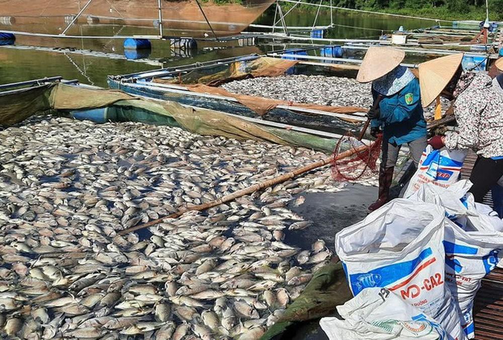 Khoảng 30 tấn cá chết hàng loạt bất thường - Ảnh 1.