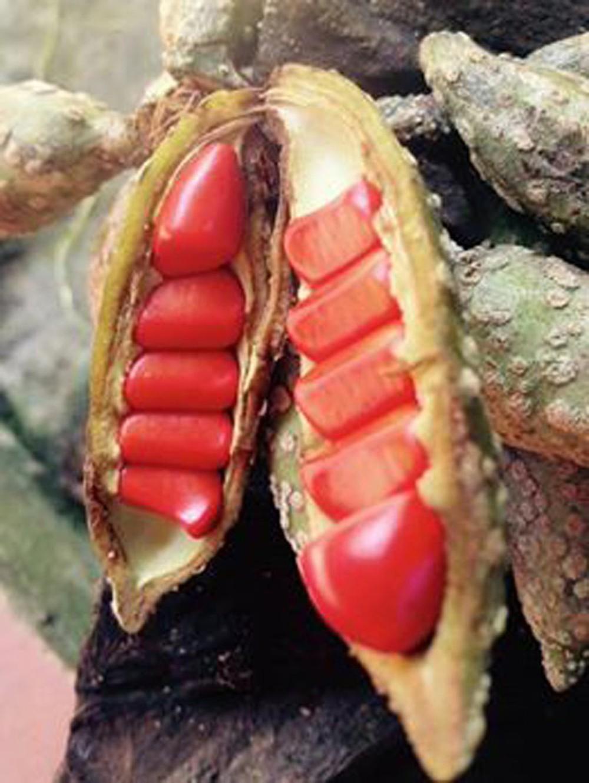 Thứ gia vị vàng của người Việt, ai ăn một lần đều sẽ nghiện - Ảnh 11.