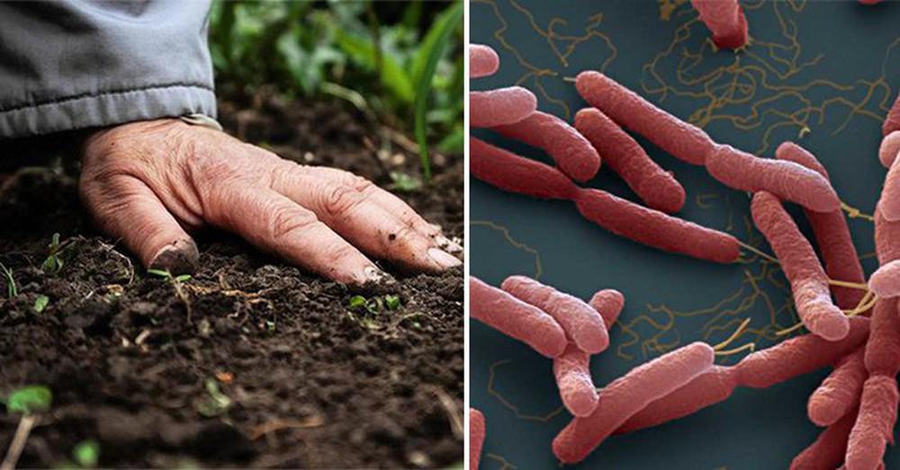 Bác sĩ bệnh viện có 4 người tử vong vì Whitmore giải ảo tin đồn vi khuẩn ăn thịt người - Ảnh 1.
