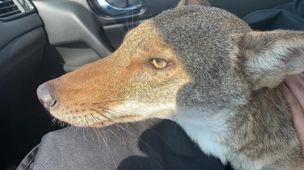 Giải cứu chú chó tội nghiệp, cô gái sốc không nói nên lời khi biết danh tính con vật - Ảnh 3.