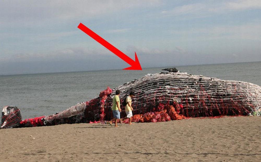 Sáng sớm thức dậy thấy cá voi khổng lồ chết dạt vào bờ biển, người dân hiếu kỳ đổ dồn đến xem rồi sốc khi nhìn thấy thứ trong miệng con vật