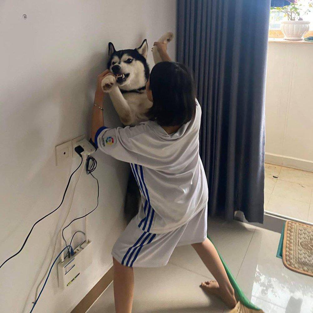 Cô gái cưỡng hôn chó Husky, biểu cảm của con vật khiến người xem không thể nhịn cười - Ảnh 2.