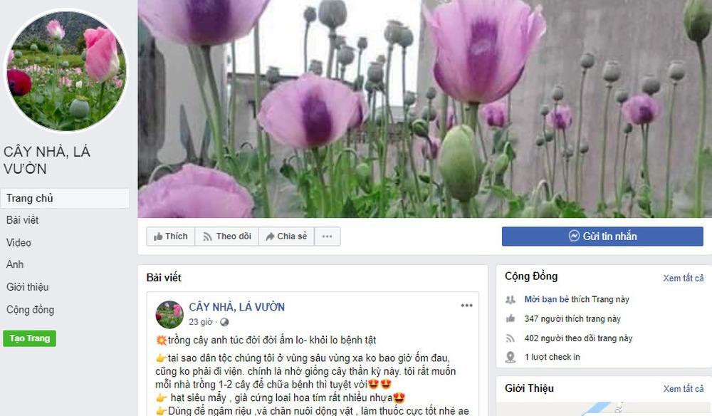 Sau mại dâm, Facebook cho quảng cáo cả giống cây anh túc ở Việt Nam  - Ảnh 1.