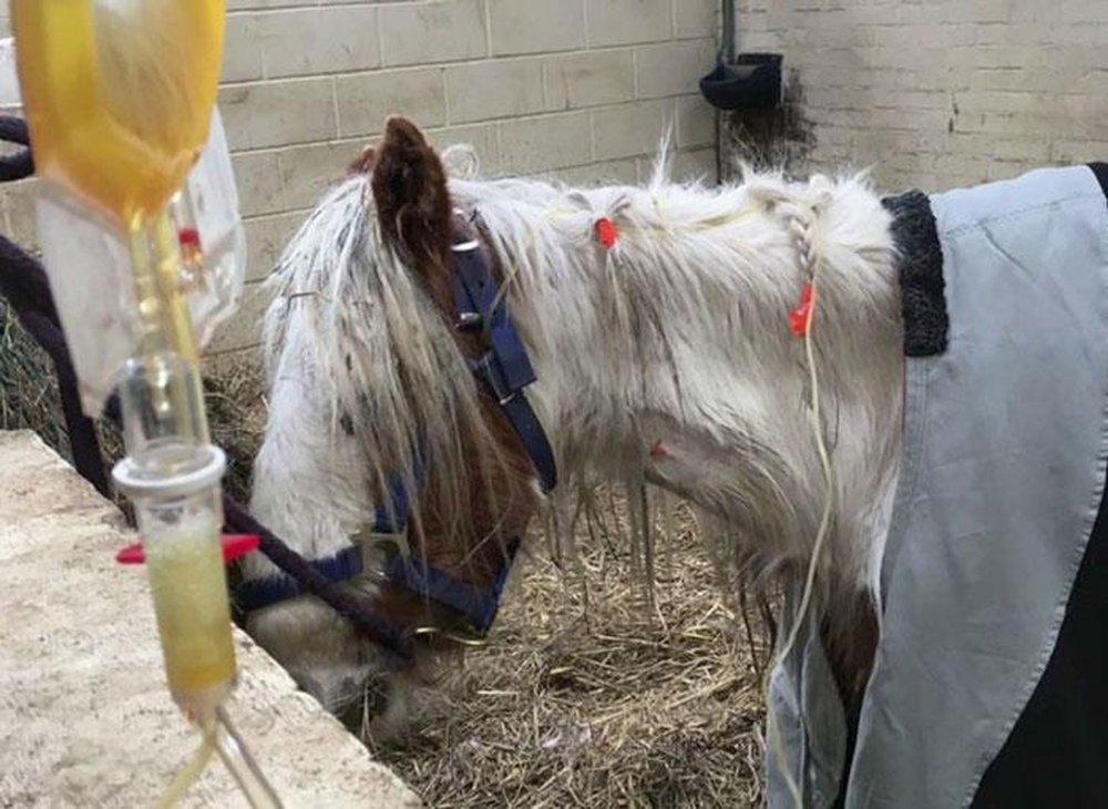 Cuộc lột xác thần kỳ của chú ngựa Pony: Từ xác khô trộn bùn đến tấm thân đẹp rực rỡ - Ảnh 4.