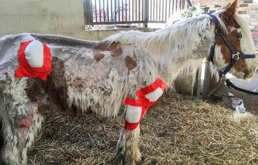 Cuộc lột xác thần kỳ của chú ngựa Pony: Từ xác khô trộn bùn đến tấm thân đẹp rực rỡ - Ảnh 5.