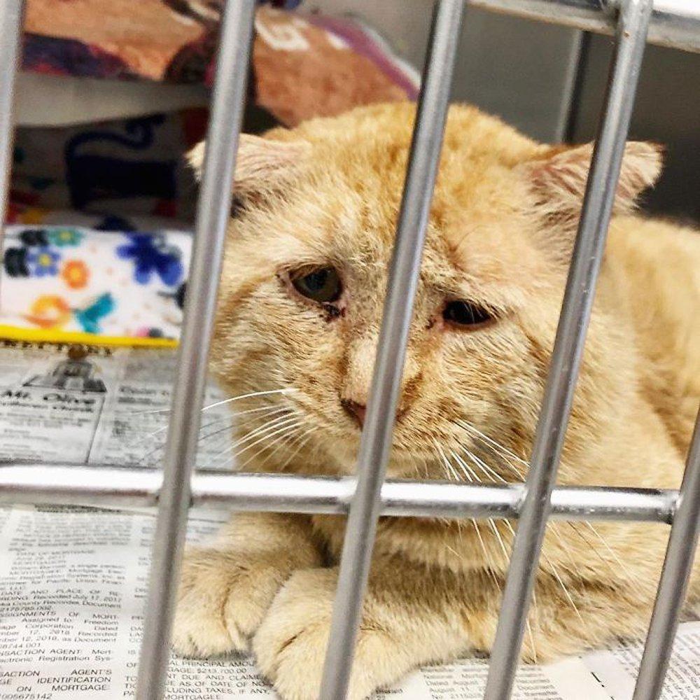 Chú mèo buồn nhất thế gian với đôi mắt như rỉ máu: Điều gì làm nên cuộc lột xác diệu kỳ? - Ảnh 1.