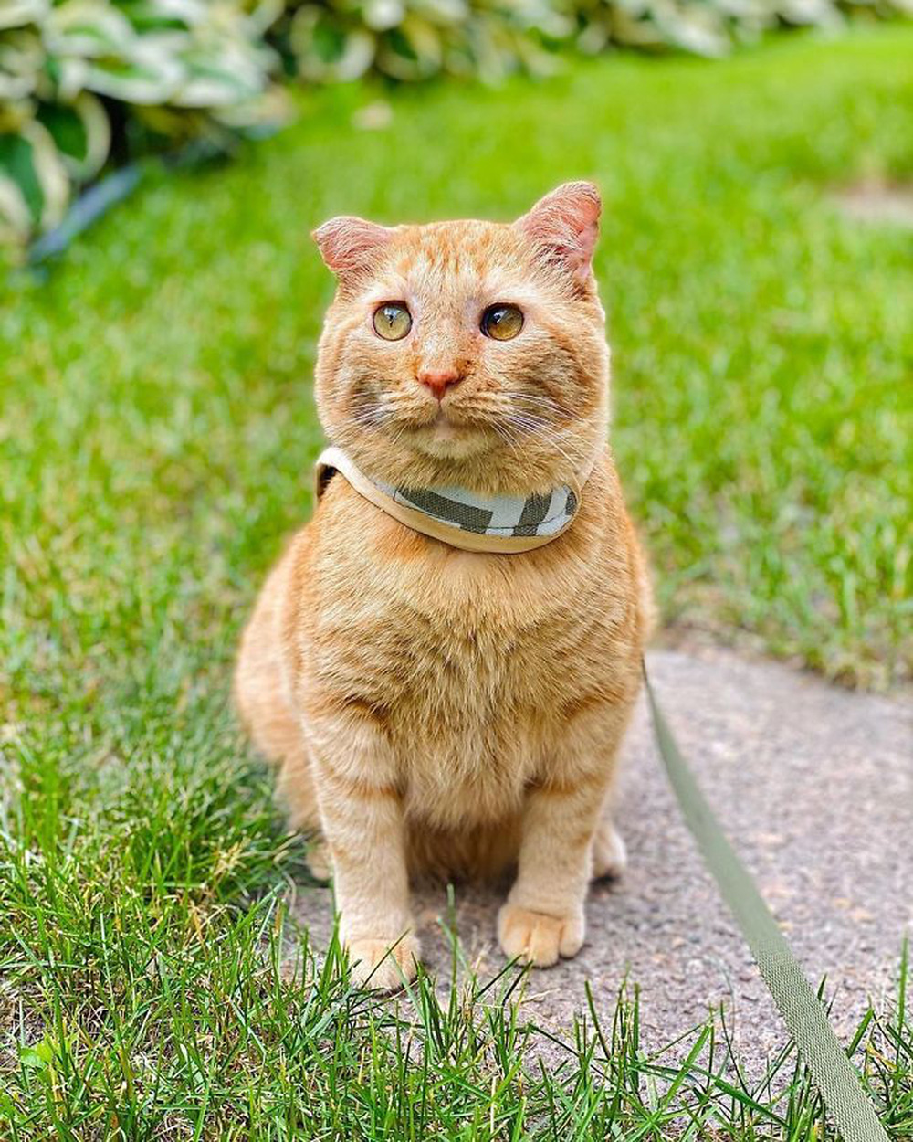 Chú mèo buồn nhất thế gian với đôi mắt như rỉ máu: Điều gì làm nên cuộc lột xác diệu kỳ? - Ảnh 11.