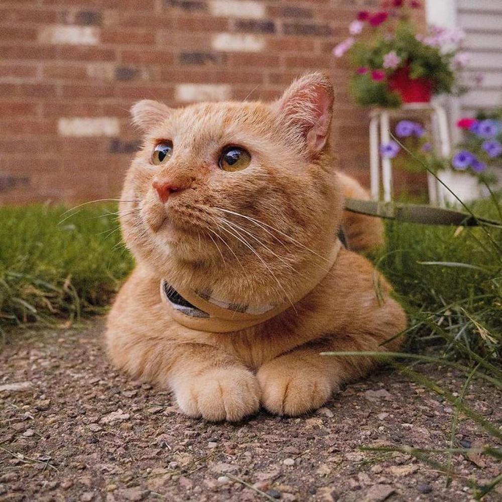 Chú mèo buồn nhất thế gian với đôi mắt như rỉ máu: Điều gì làm nên cuộc lột xác diệu kỳ? - Ảnh 6.
